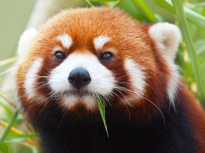 Firefox © Khoroshunova Olga - Shutterstock