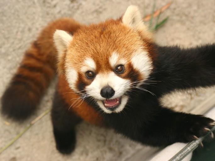 Firefox © Kong - Shutterstock