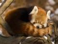 Firefox © Martin Vrlik - Shutterstock