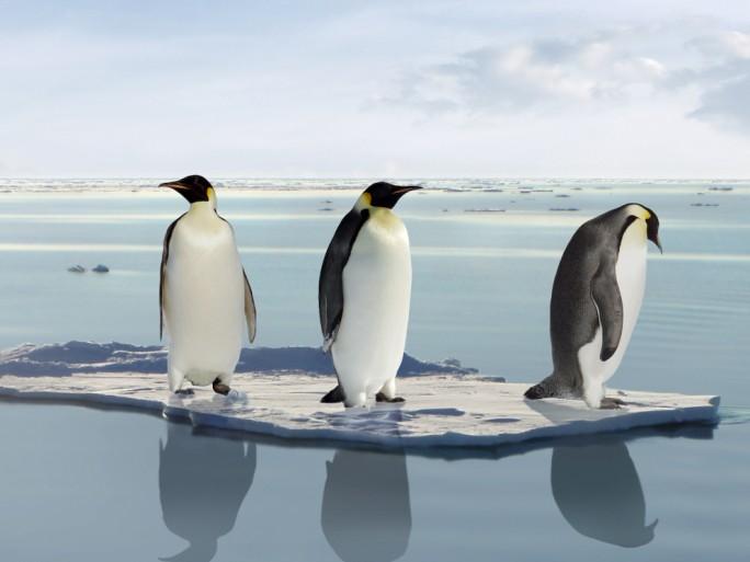 Manchot, Linux © Jan Martin Will - Shutterstock