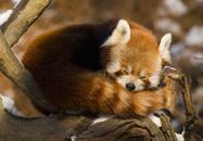 Quiz Firefox © Martin Vrlik - Shutterstock