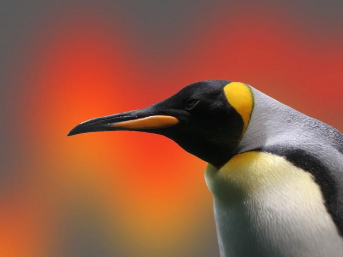 Linux 3.7 open source nouveautés © Nik Frey - Fotolia.com