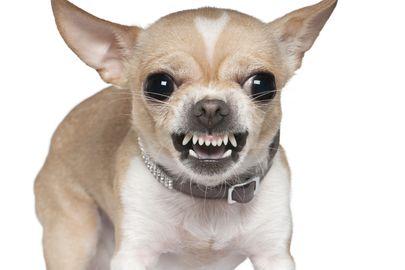 menace dents (crédit photo © Eric Isselee - shutterstock)