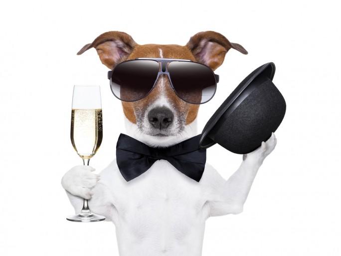 Anniversaire, fête, champagne © Javier Brosch - Shutterstock