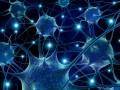 Neurone © Fedorov Oleksiy - Shutterstock