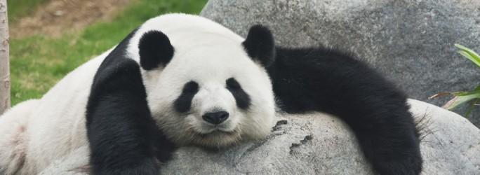 Panda virus