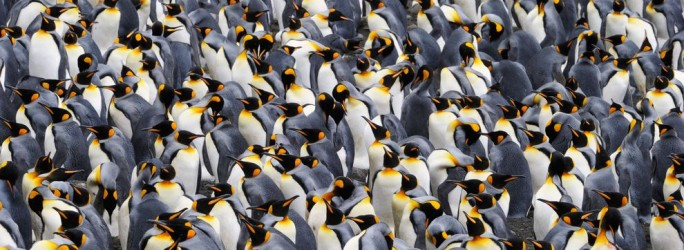 linux pingouins