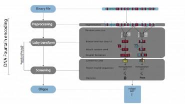 ADN code fontaine