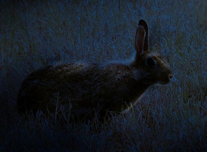 bad-rabbit-ransomware-code-nsa