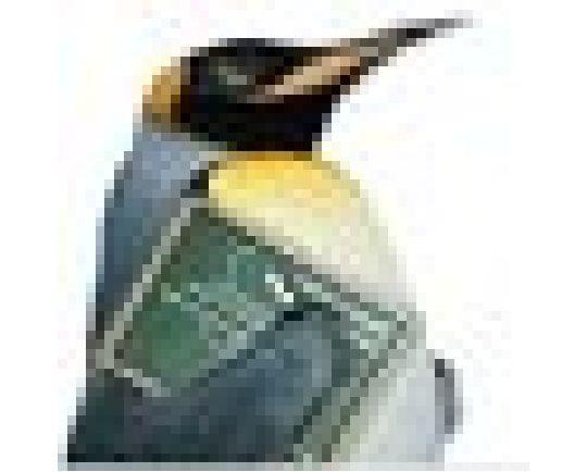 2004116-linux01